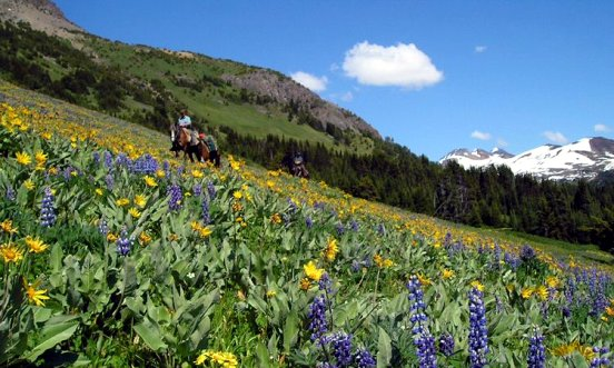 Contact -Pack trip in alpine meadow