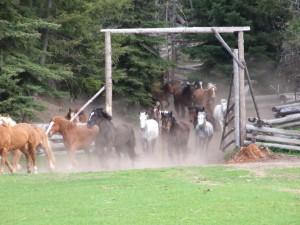 Activities -Running horses