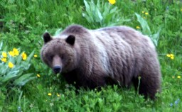 Adventure Opportunities-Grizzly viewing