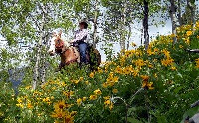 Employment Opportunities-Horse riding